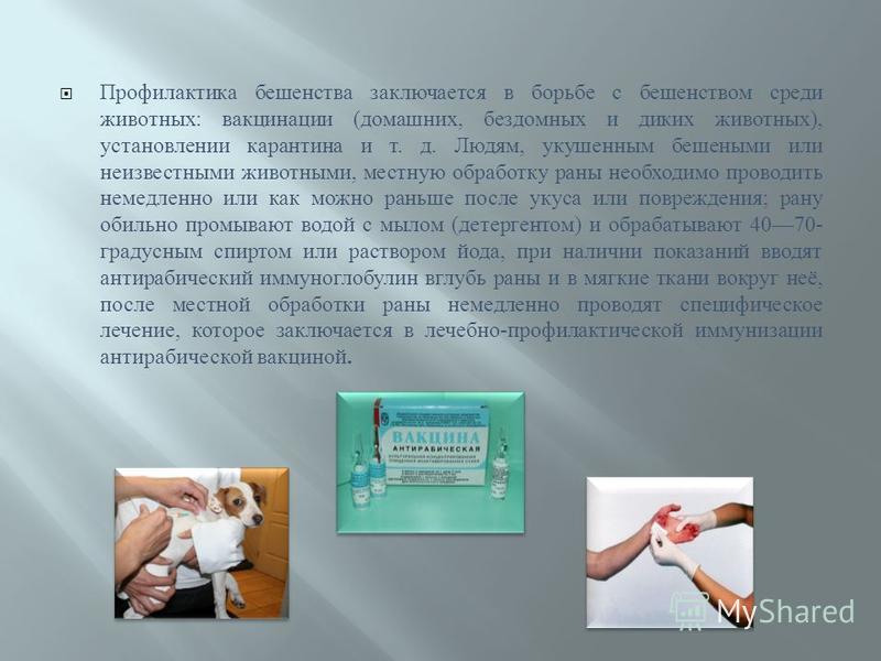 Профилактика бешенства заключается в борьбе с бешенством среди животных : вакцинации ( домашних, бездомных и диких животных ), установлении карантина и т. д. Людям, укушенным бешеными или неизвестными животными, местную обработку раны необходимо пров