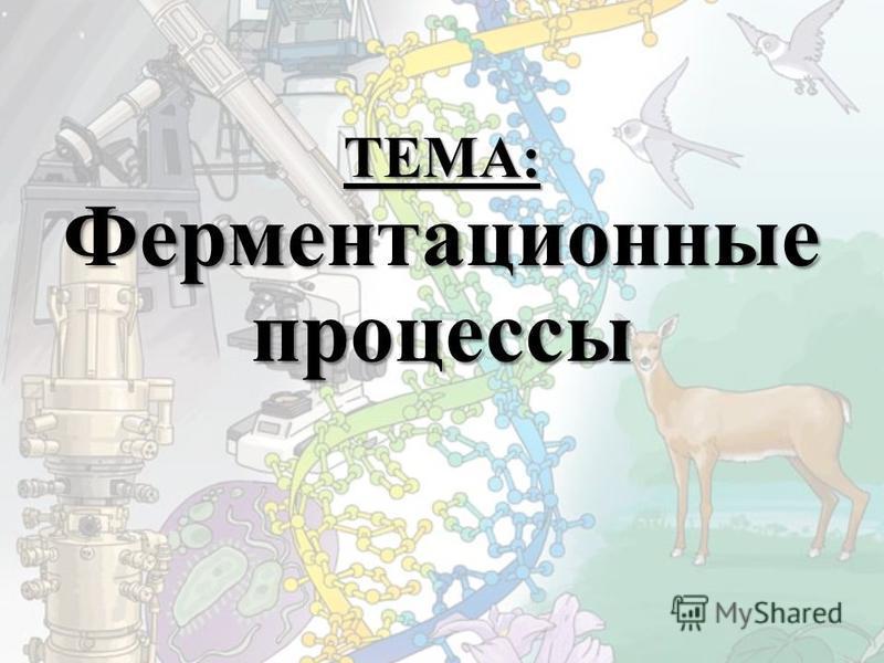 ТЕМА: Ферментационные процессы