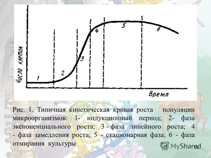 19 Рис. 1. Типичная кинетическая кривая роста популяции микроорганизмов: 1- индукционный период; 2- фаза экспоненциального роста; 3 - фаза линейного роста; 4 - фаза замедления роста; 5 - стационарная фаза; 6 - фаза отмирания культуры