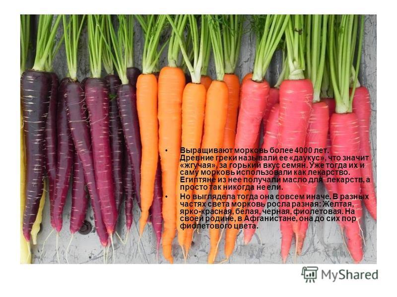 Выращивают морковь более 4000 лет. Древние греки называли ее «да укус», что значит «жгучая», за горький вкус семян. Уже тогда их и саму морковь использовали как лекарство. Египтяне из нее получали масло для лекарств, а просто так никогда не ели. Но в