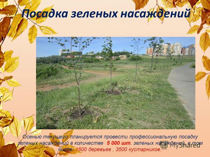 Посадка зеленых насаждений Осенью текущего планируется провести профессиональную посадку зеленых насаждений в количестве 5 000 шт. зеленых насаждений, в том числе: 1500 деревьев, 3500 кустарников.
