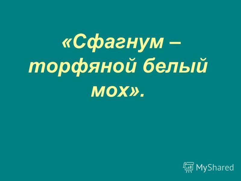 «Сфагнум – торфяной белый мох».