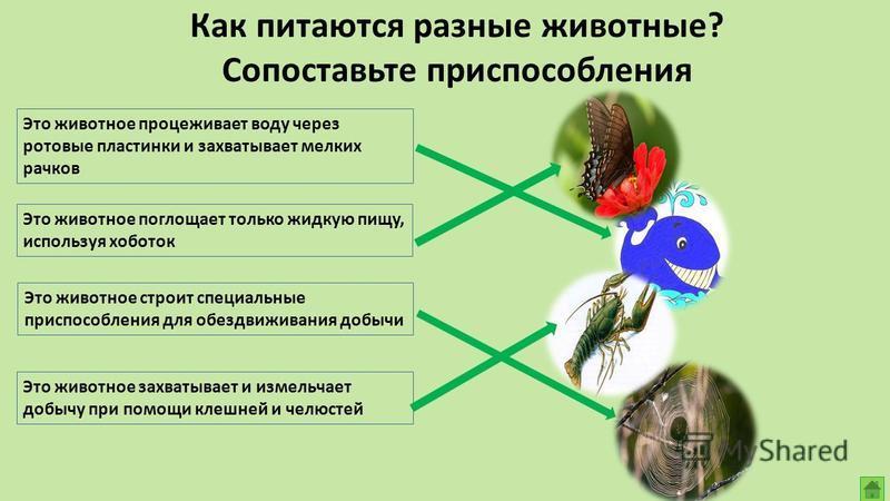 Перед вами изображения обитателей природных ландшафтов Кемеровской области. Выберите среди них те организмы, которые сами производят органические вещества