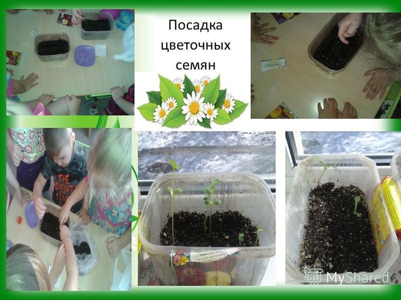 Посадка цветочных семян