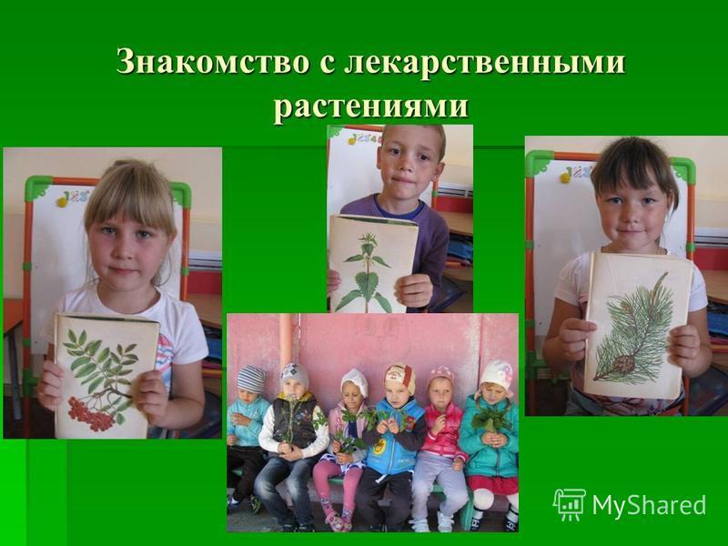 Знакомство с лекарственными растениями