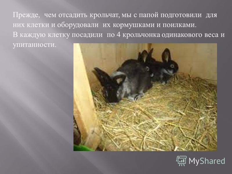 Прежде, чем отсадить крольчат, мы с папой подготовили для них клетки и оборудовали их кормушками и поилками. В каждую клетку посадили по 4 крольчонка одинакового веса и упитанности.