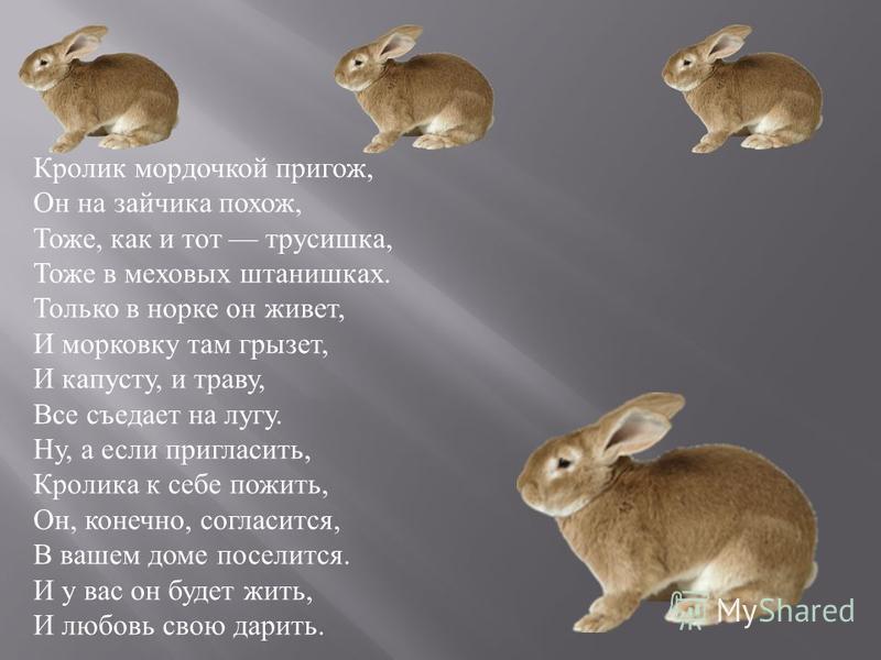 Кролик мордочкой пригож, Он на зайчика похож, Тоже, как и тот трусишка, Тоже в меховых штанишках. Только в норке он живет, И морковку там грызет, И капусту, и траву, Все съедает на лугу. Ну, а если пригласить, Кролика к себе пожить, Он, конечно, согл