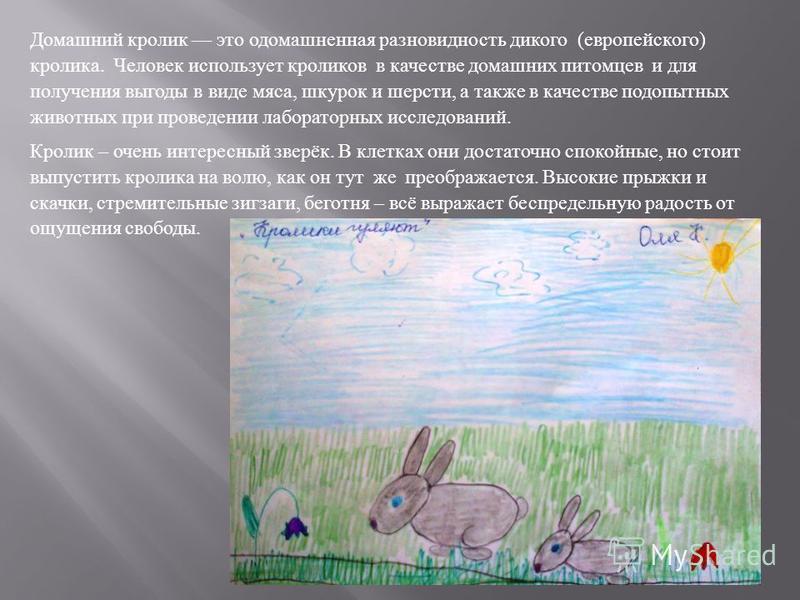 Домашний кролик это одомашненная разновидность дикого ( европейского ) кролика. Человек использует кроликов в качестве домашних питомцев и для получения выгоды в виде мяса, шкурок и шерсти, а также в качестве подопытных животных при проведении лабора