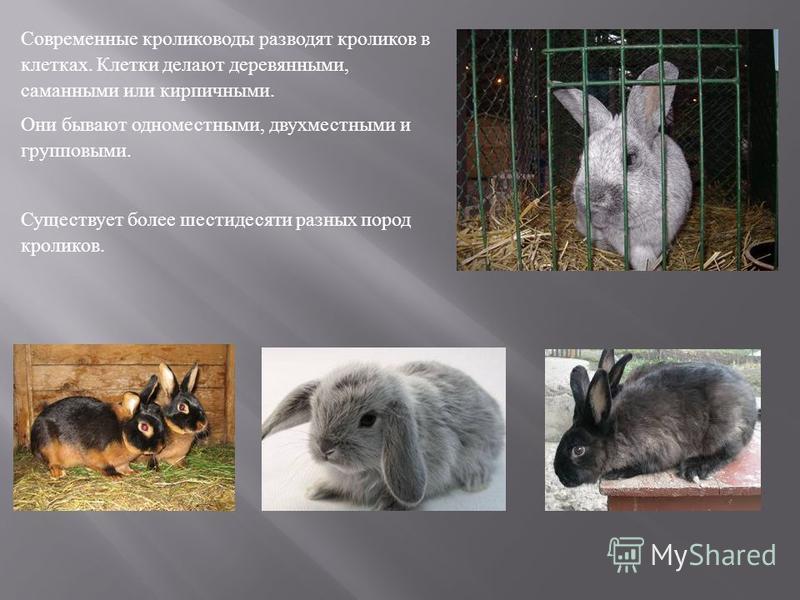 Современные кролиководы разводят кроликов в клетках. Клетки делают деревянными, саманными или кирпичными. Они бывают одноместными, двухместными и групповыми. Существует более шестидесяти разных пород кроликов.