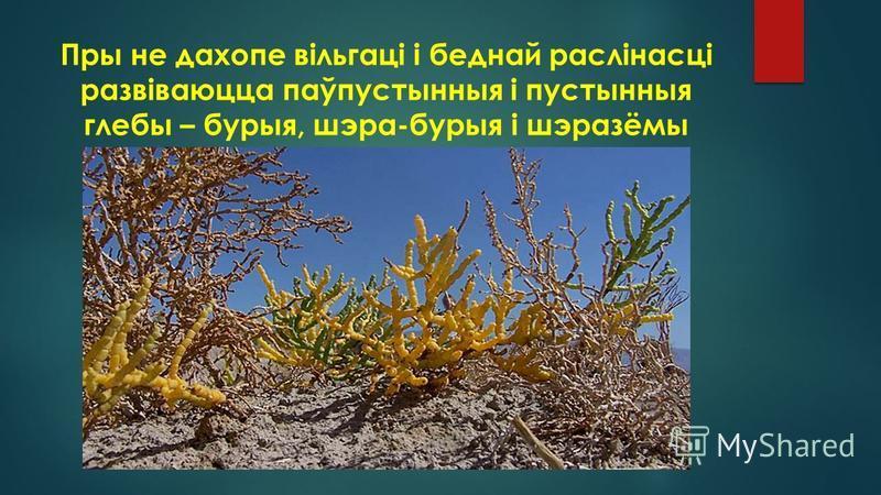 Пры не дахопе вільгаці і беднай раслінасці развіваюцца паўпустынныя і пустынныя глебы – бурыя, шэра-бурыя і шэразёмы