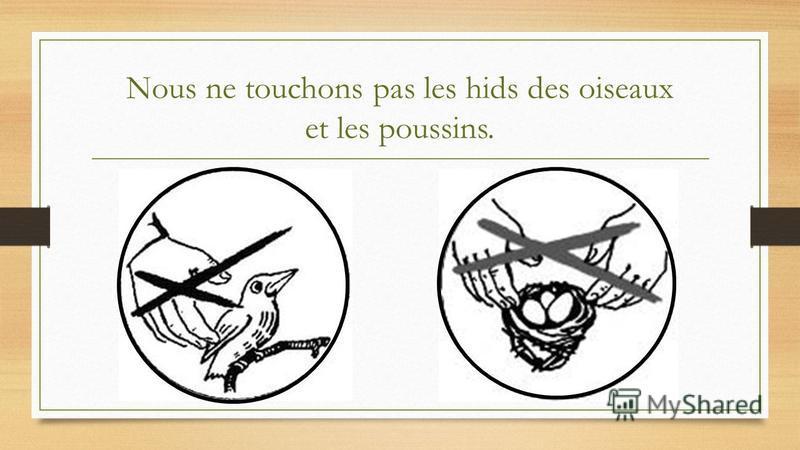 Nous ne touchons pas les hids des oiseaux et les poussins.