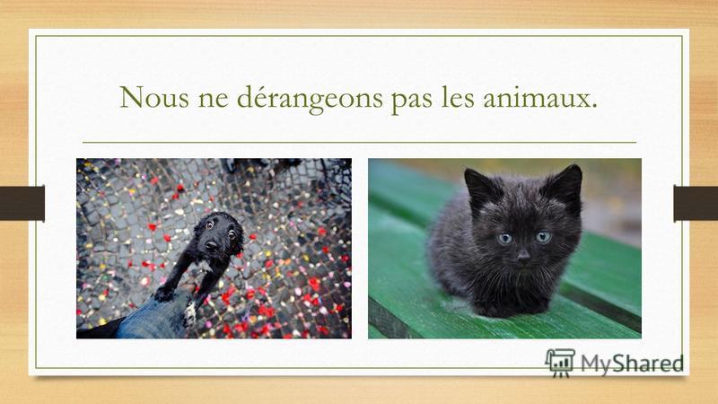 Nous ne dérangeons pas les animaux.