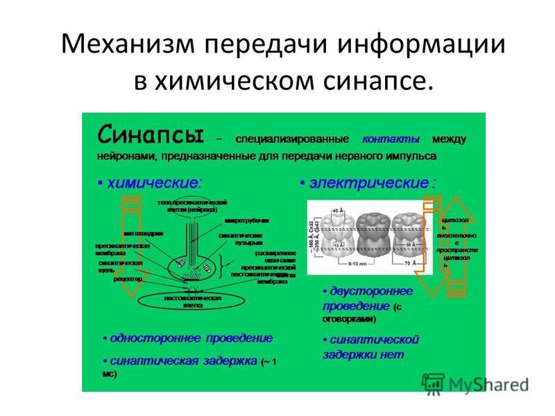 Механизм передачи информации в химическом синапсе.