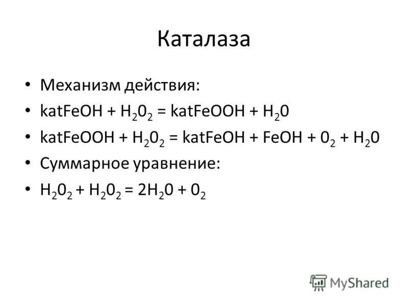 Каталаза Механизм действия: katFeOH + H 2 0 2 = katFeOOH + H 2 0 katFeOOH + H 2 0 2 = katFeOH + FeOH + 0 2 + H 2 0 Суммарное уравнение: H 2 0 2 + H 2 0 2 = 2H 2 0 + 0 2