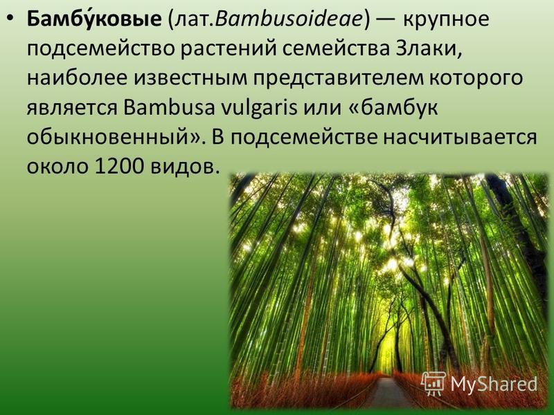 Бамбу́новые (лат.Bambusoideae) крупное подсемейство растений семейства Злаки, наиболее известным представителем которого является Bambusa vulgaris или «бамбук обыкновенный». В подсемействе насчитывается около 1200 видов.