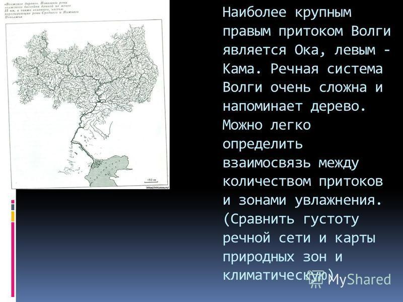 Наиболее крупным правым притоком Волги является Ока, левым - Кама. Речная система Волги очень сложна и напоминает дерево. Можно легко определить взаимосвязь между количеством притоков и зонами увлажнения. (Сравнить густоту речной сети и карты природн