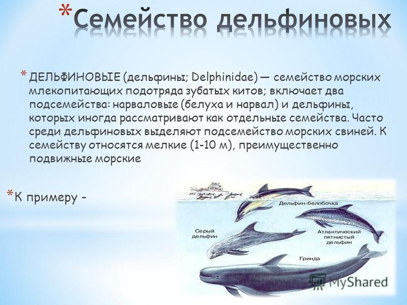 * ДЕЛЬФИНОВЫЕ (дельфины; Delphinidae) семейство морских млекопитающих подотряда зубатых китов; включает два подсемейства: нарваловые (белуха и нарвал) и дельфины, которых иногда рассматривают как отдельные семейства. Часто среди дельфиновых выделяют