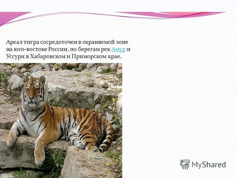 Распространение Ареал тигра сосредоточен в охраняемой зоне на юго-востоке России, по берегам рек Амур и Уссури в Хабаровском и Приморском крае. Всего в России на 1996 год насчитывалось около 415476 особей. Около 10 % (4050 особей) популяции амурского