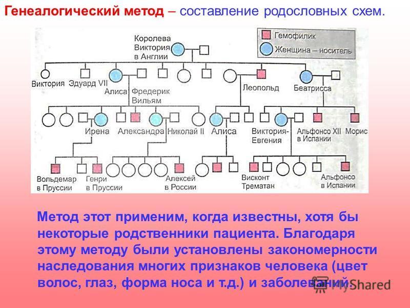 Генеалогический метод – составление родословных схем. Метод этот применим, когда известны, хотя бы некоторые родственники пациента. Благодаря этому методу были установлены закономерности наследования многих признаков человека (цвет волос, глаз, форма