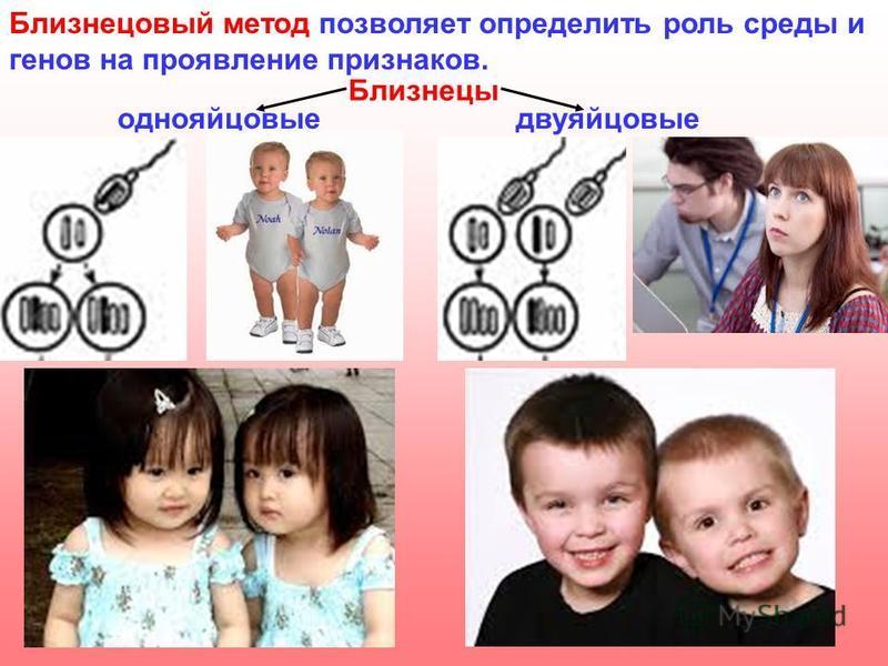 Близнецовый метод позволяет определить роль среды и генов на проявление признаков. Близнецы однояйцовыедвуяйцовые