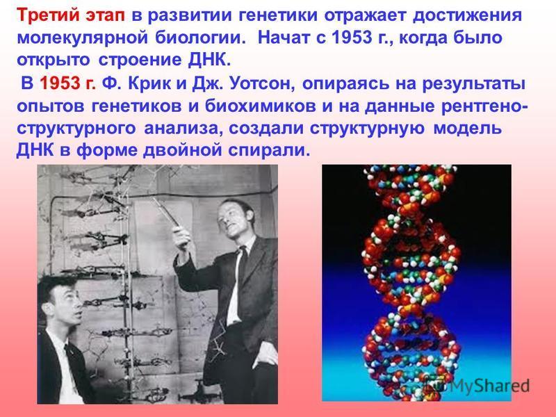 Третий этап в развитии генетики отражает достижения молекулярной биологии. Начат с 1953 г., когда было открыто строение ДНК. В 1953 г. Ф. Крик и Дж. Уотсон, опираясь на результаты опытов генетиков и биохимиков и на данные рентгеноструктурного анализа