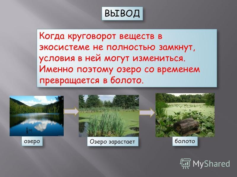 Когда круговорот веществ в экосистеме не полностью замкнут, условия в ней могут измениться. Именно поэтому озеро со временем превращается в болото. ВЫВОД озеро Озеро зарастает болото