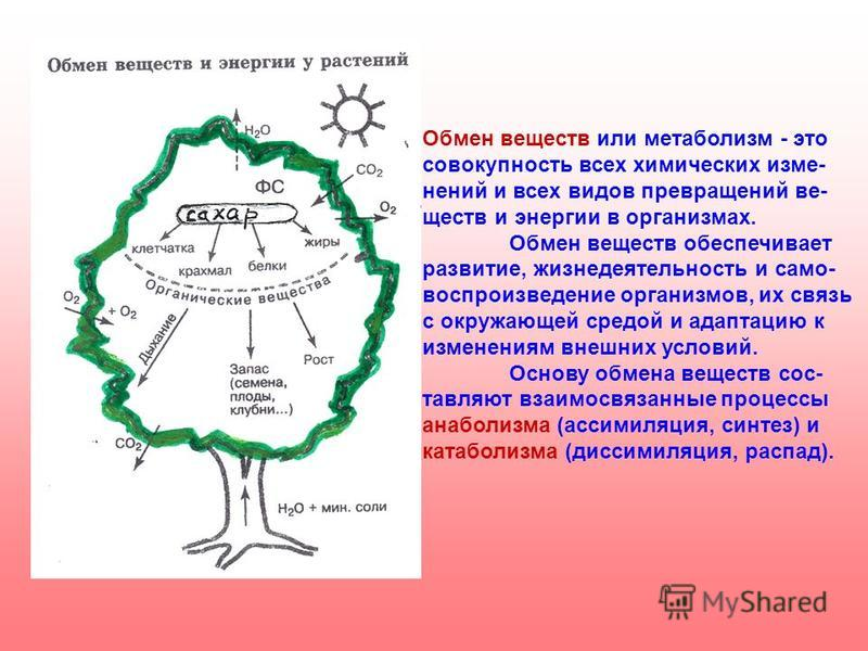 Обмен веществ или метаболизм - это совокупность всех химических изменений и всех видов превращений веществ и энергии в организмах. Обмен веществ обеспечивает развитие, жизнедеятельность и само- воспроизведение организмов, их связь с окружающей средой