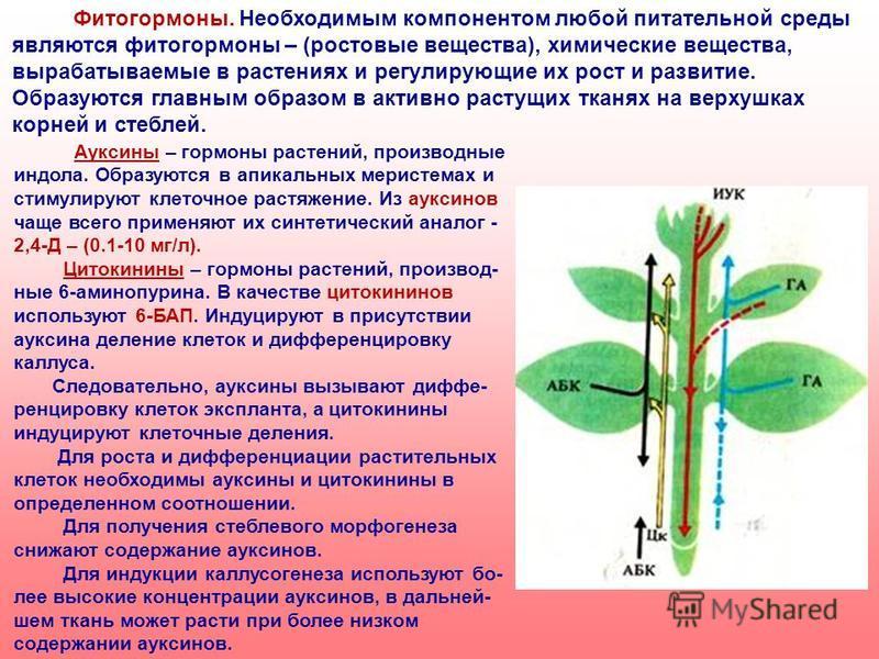 Фитогормоны. Необходимым компонентом любой питательной среды являются фитогормоны – (ростовые вещества), химические вещества, вырабатываемые в растениях и регулирующие их рост и развитие. Образуются главным образом в активно растущих тканях на верхуш