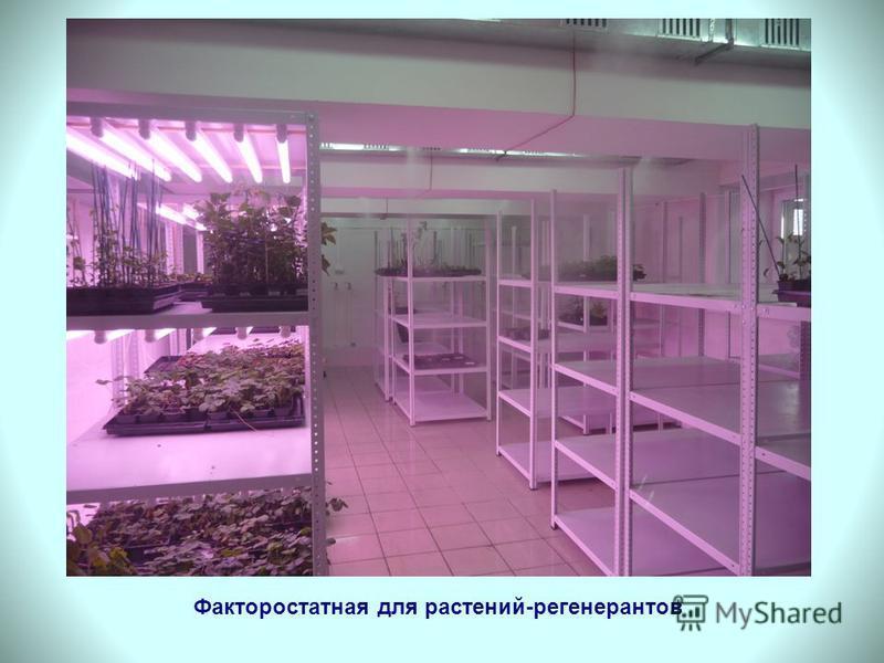Факторостатная для растений-регенератов