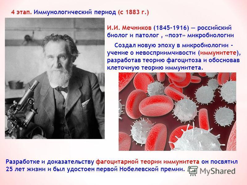 И.И. Мечников (1845-1916) российский биолог и патолог, «поэт» микробиологии 4 этап. Иммунологический период (с 1883 г.) Создал новую эпоху в микробиологии - учение о невосприимчивости (иммунитете), разработав теорию фагоцитоза и обосновав клеточную т