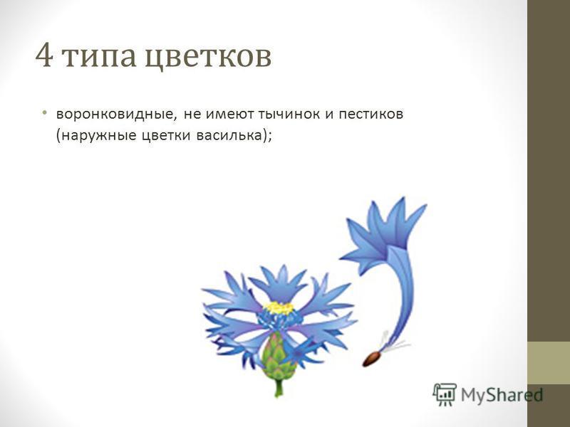 4 типа цветков воронковидные, не имеют тычинок и пестиков (наружные цветки василька);
