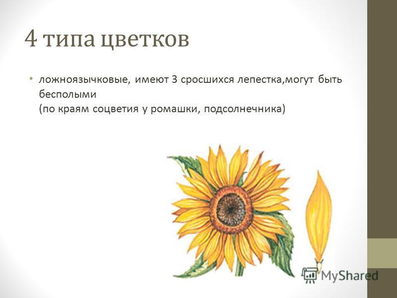 4 типа цветков ложноязычковые, имеют 3 сросшихся лепестка,могут быть бесполыми (по краям соцветия у ромашки, подсолнечника)