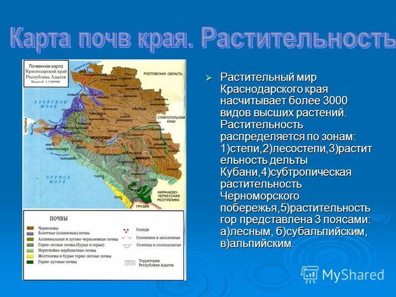 Растительный мир Краснодарского края насчитывает более 3000 видов высших растений. Растительность распределяется по зонам: 1)степи,2)лесостепи,3)растительность дельты Кубани,4)субтропическая растительность Черноморского побережья,5)растительность гор