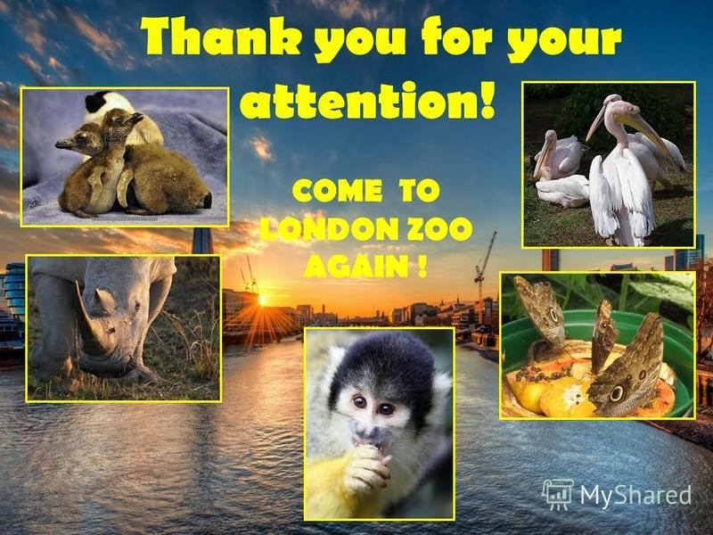 Thank you for your attention! COME TO LONDON ZOO AGAIN !
