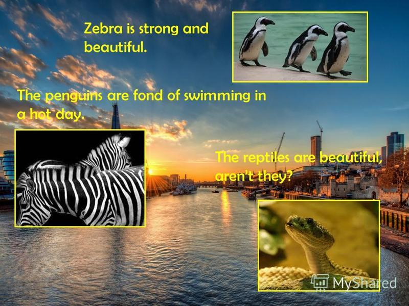 Zebra is strong and beautiful. The penguins are fond of swimming in a hot day. The reptiles are beautiful, arent they?