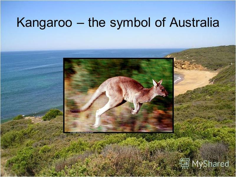 Kangaroo – the symbol of Australia