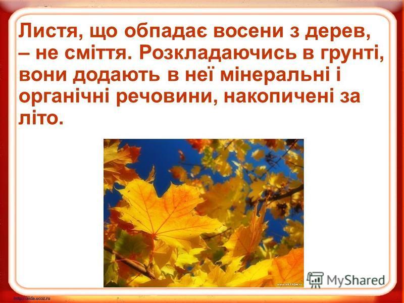 Листя, що обпадає восени з дерев, – не сміття. Розкладаючись в грунті, вони додають в неї мінеральні і органічні речовини, накопичені за літо.