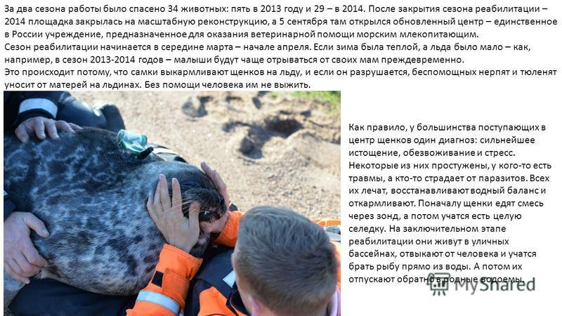 За два сезона работы было спасено 34 животных: пять в 2013 году и 29 – в 2014. После закрытия сезона реабилитации – 2014 площадка закрылась на масштабную реконструкцию, а 5 сентября там открылся обновленный центр – единственное в России учреждение, п