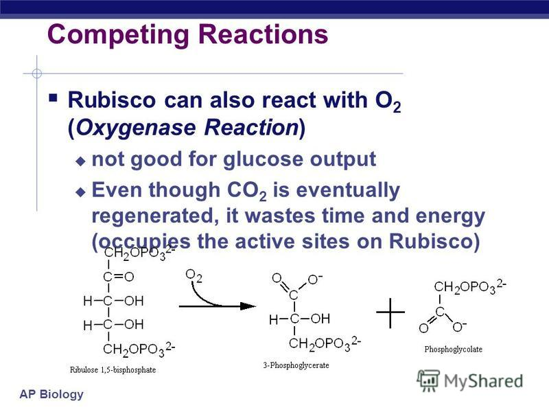 AP Biology Competing Reactions Rubisco can react with CO 2 (Carboxylase Reaction) – good for glucose output