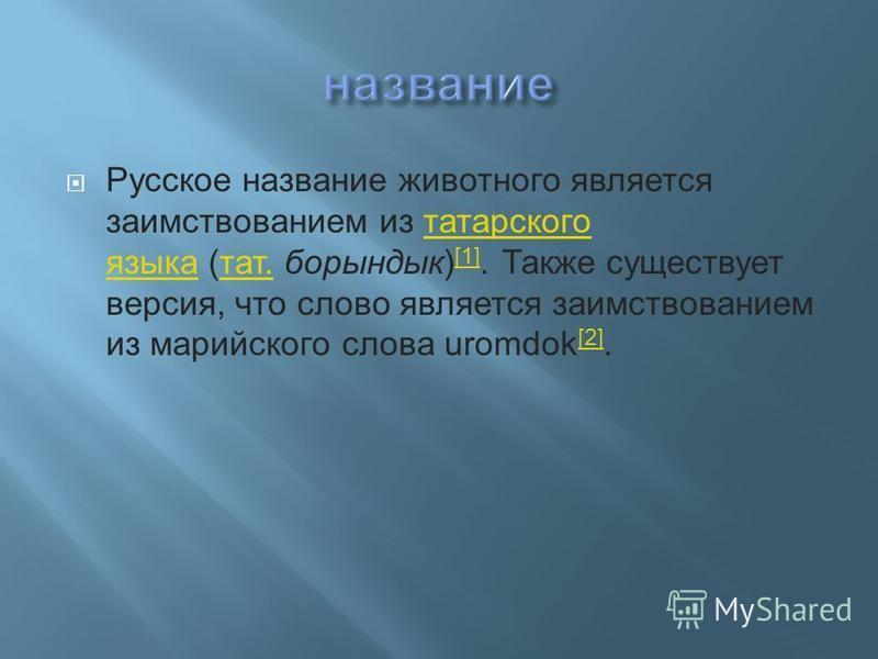Русское название животного является заимствованием из татарского языка (тат. борындык) [1]. Также существует версия, что слово является заимствованием из марийского слова uromdok [2].татарского языка тат. [1] [2]