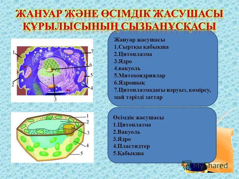 Жануар жасушасы 1.Сыртқы қабықша 2.Цитоплазма 3.Ядро 4.вакуоль 5.Митохондриялар 6.Ядрошық 7.Цитоплазмадағы нәруыз, көмірсу, май тәрізді заттар Өсімдік жасушасы 1.Цитоплазма 2.Вакуоль 3.Ядро 4.Пластидтер 5.Қабықша