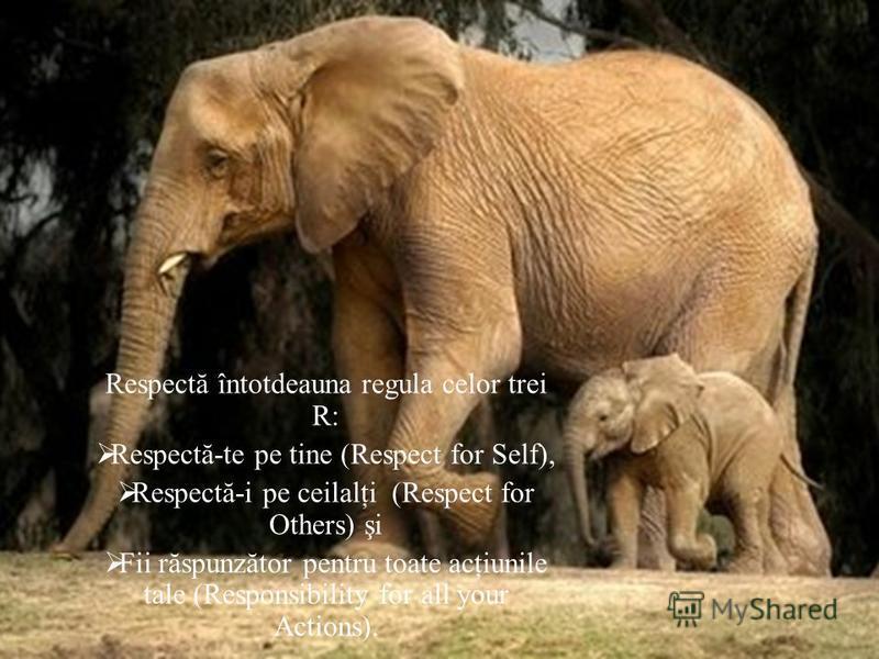 Respectă întotdeauna regula celor trei R: Respectă-te pe tine ( Respect for Self ), Respectă-i pe ceilalţi ( Respect for Others ) şi Fii răspunzător pentru toate acţiunile tale ( Responsibility for all your Actions ).