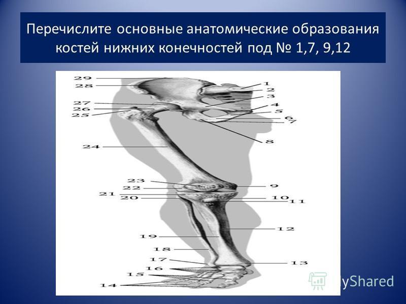 Перечислите основные анатомические образования костей нижних конечностей под 1,7, 9,12
