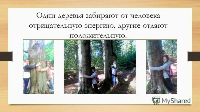 Одни деревья забирают от человека отрицательную энергию, другие отдают положительную.