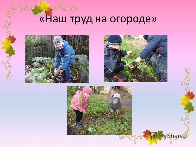 «Наш труд на огороде»