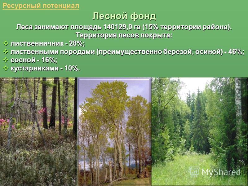 Лесной фонд Ресурсный потенциал Леса занимают площадь 140129,0 га (15% территории района). Территория лесов покрыта: лиственничник - 28%; лиственничник - 28%; лиственными породами (преимущественно березой, осиной) - 46%; лиственными породами (преимущ
