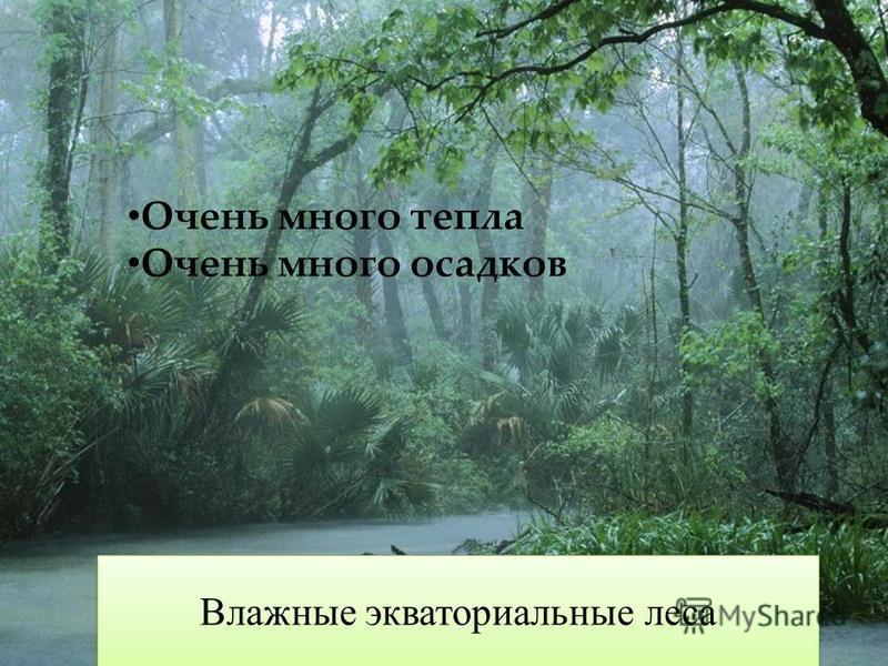 Очень много тепла Очень много осадков Влажные экваториальные леса
