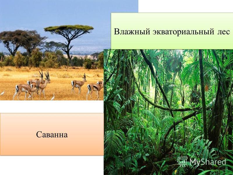 Влажный экваториальный лес Саванна