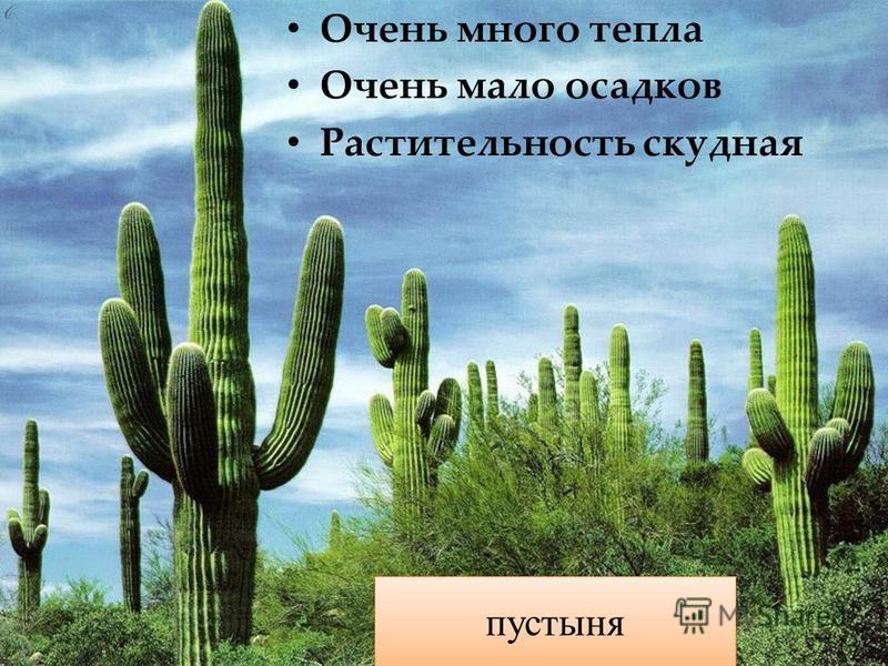 Очень много тепла Очень мало осадков Растительность скудная пустыня