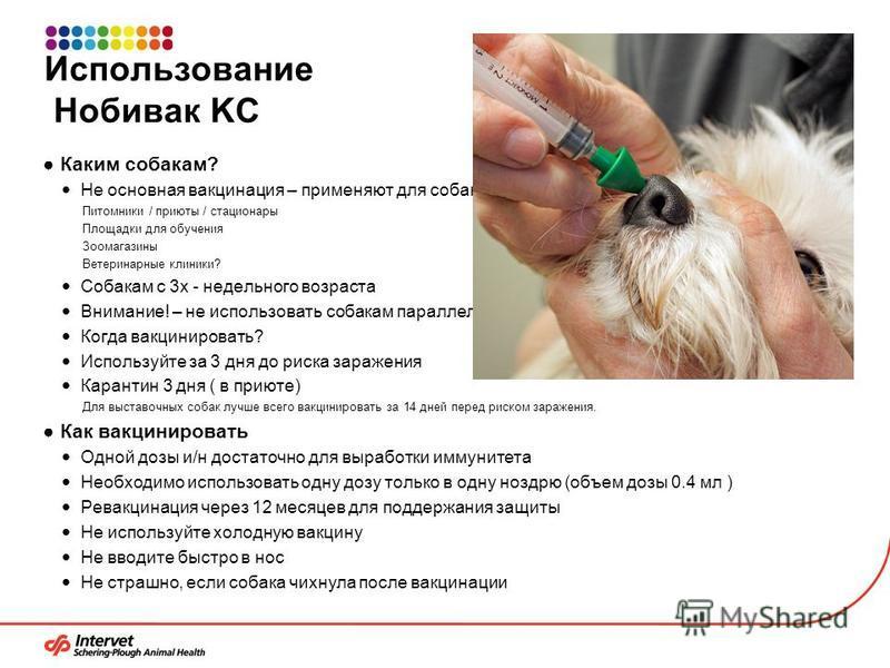 Использование Нобивак KC Каким собакам? Не основная вакцинация – применяют для собак из «группы риска» Питомники / приюты / стационары Площадки для обучения Зоомагазины Ветеринарные клиники? Собакам с 3 х - недельного возраста Внимание! – не использо